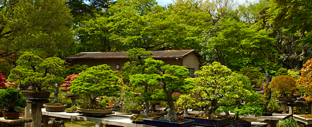 Omiya Bonsai Village Into Japan